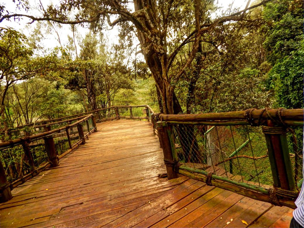 Nairobi Safari Walk_boardwalk2