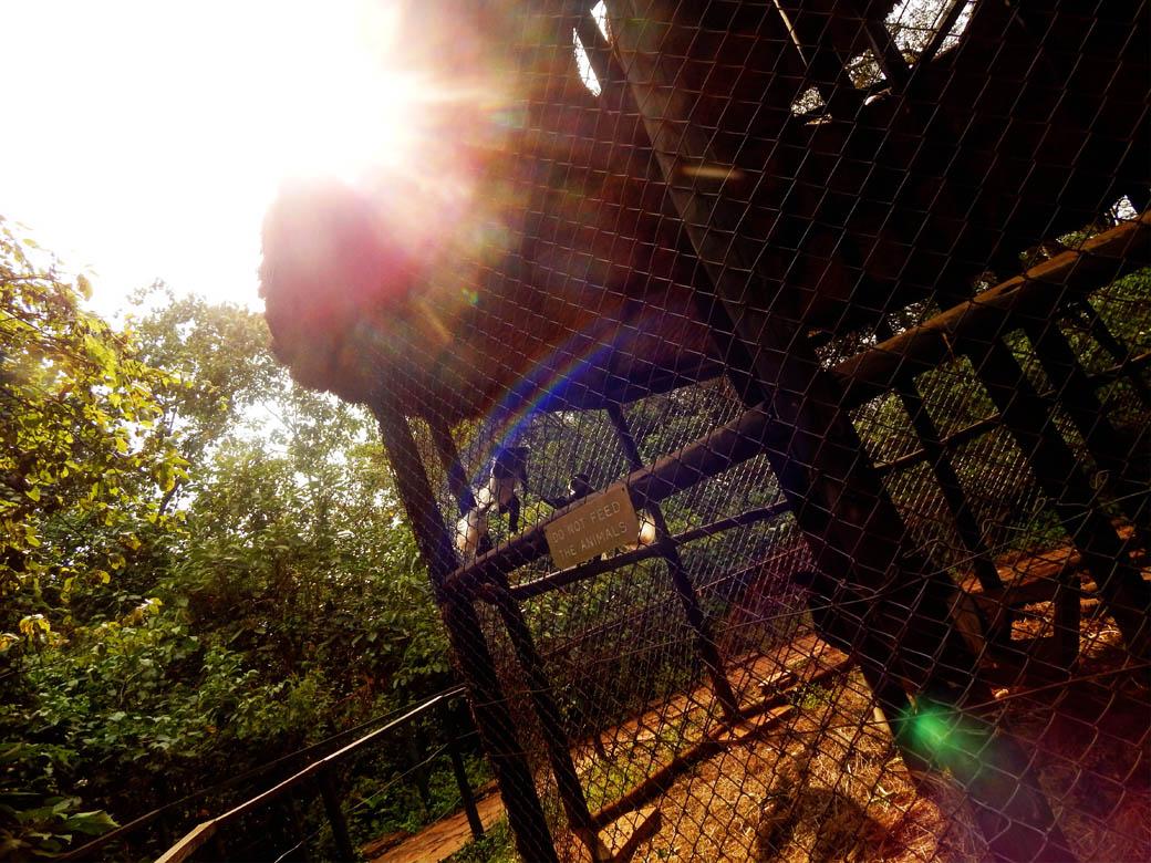 Nairobi Safari Walk_colobus monkeys playin