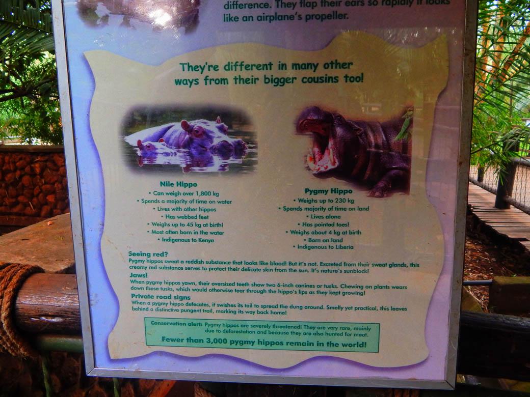 Nairobi Safari Walk_hippo info