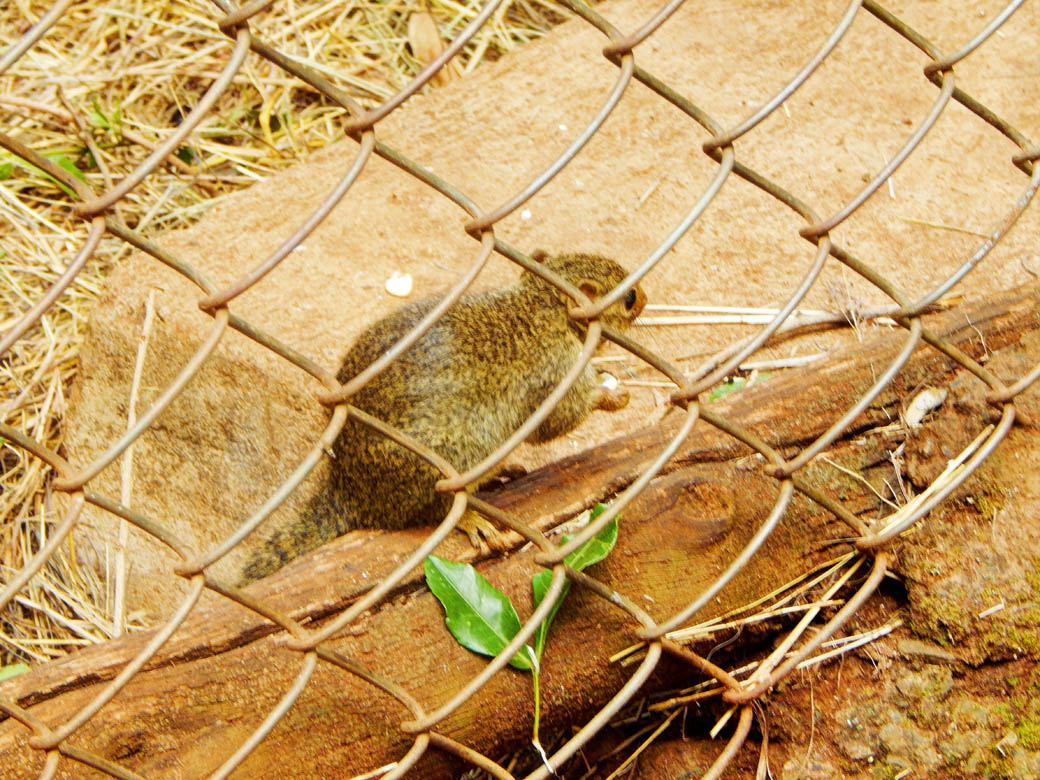 Nairobi Safari Walk_squirell