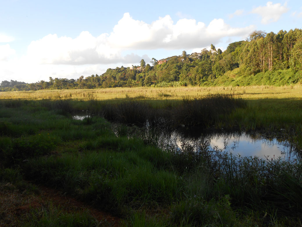 Ondiri Swamp old 5