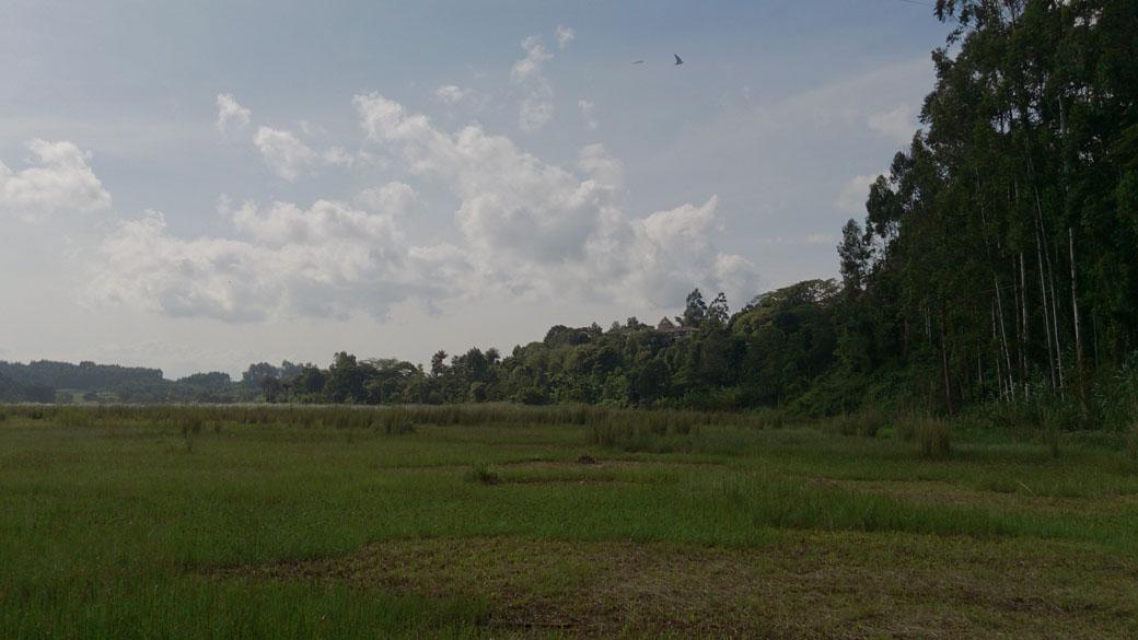Ondiri swamp 3