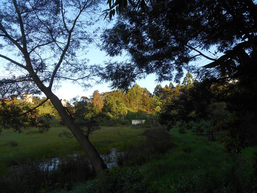 Ondiri swamp