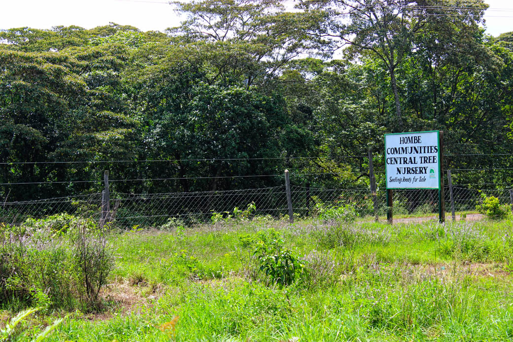 Save Mount Kenya _Hombe tree nursery