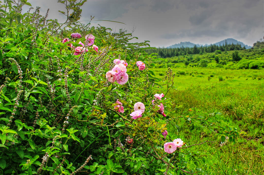 Save Mount Kenya _flowers
