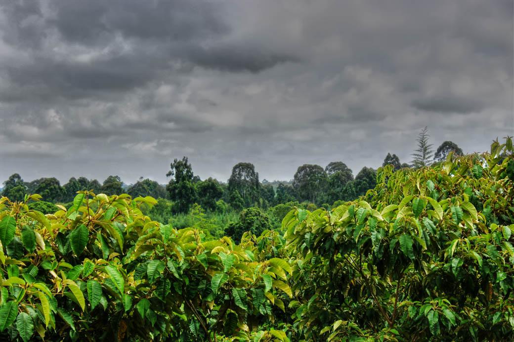 Save Mount Kenya_bush 2