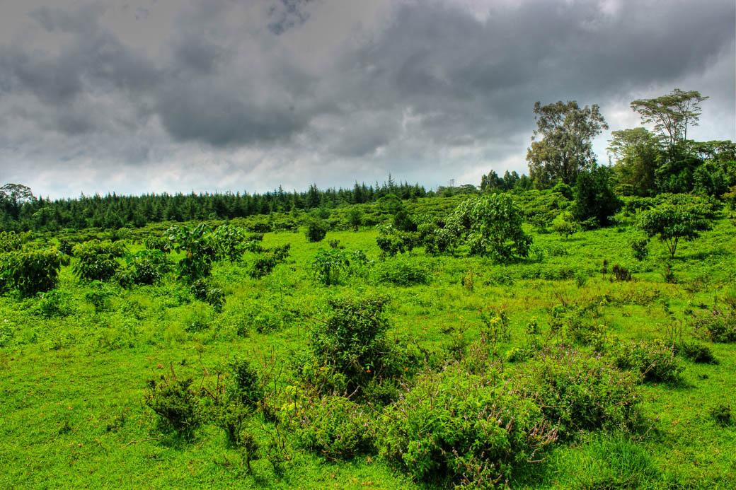 Save Mount Kenya_clearing