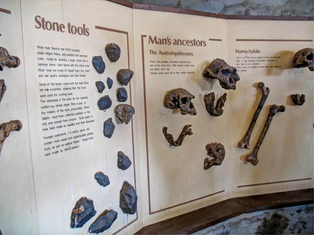 Koobi Fora Museum_Artefacts