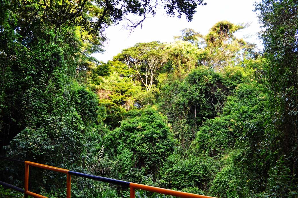 Oloolua Nature Trail_Bridge2