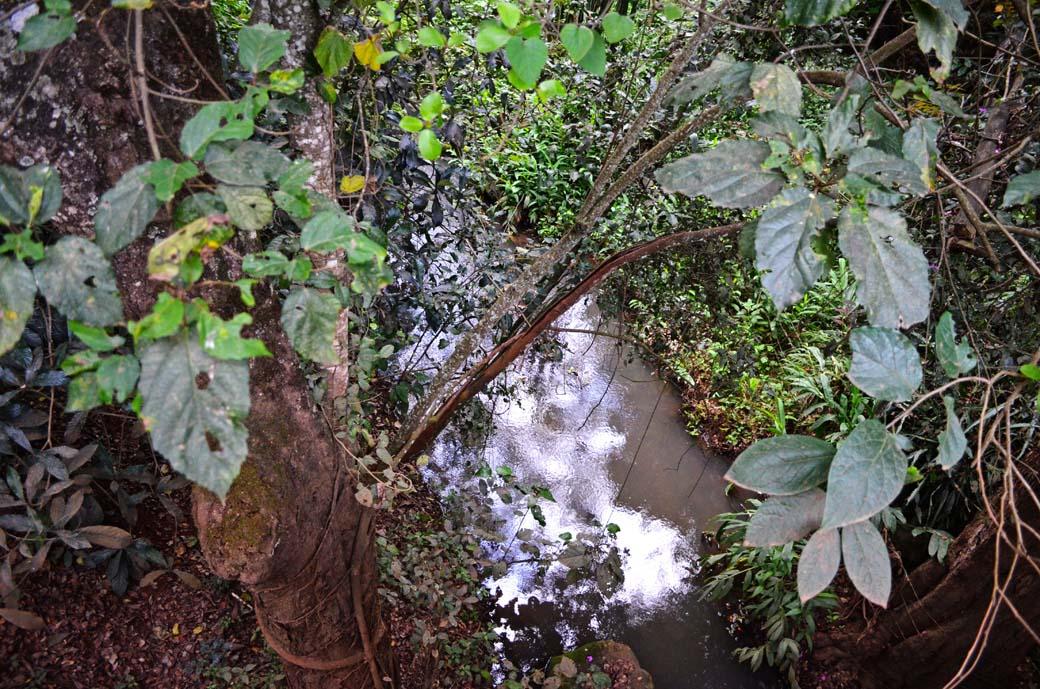 Oloolua Nature Trail_River1