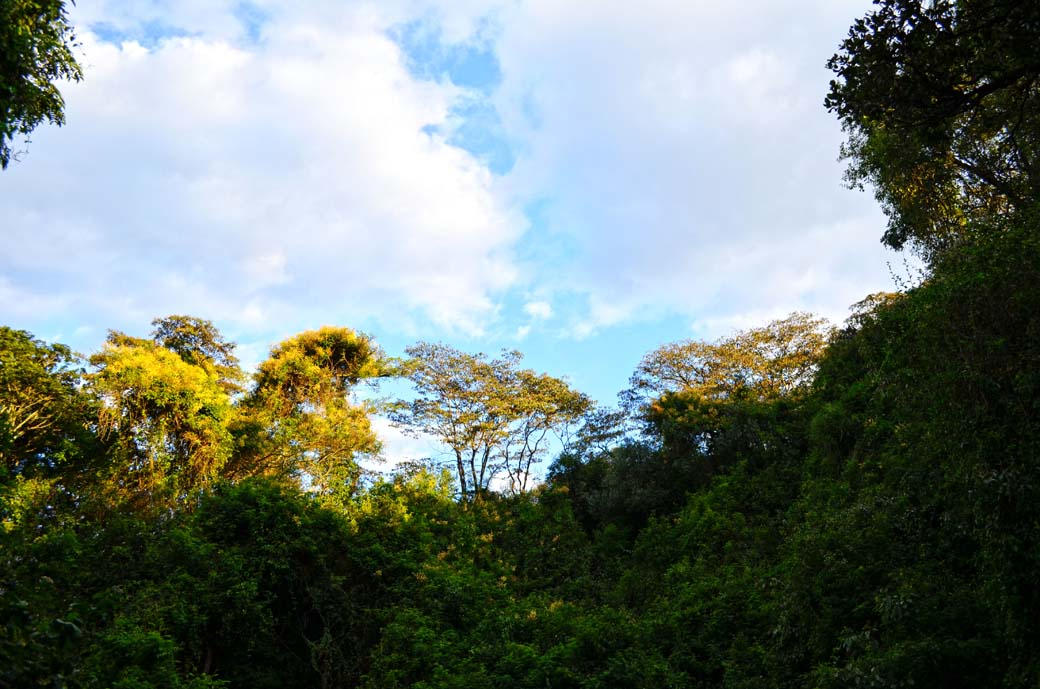 Oloolua Nature Trail_Trees