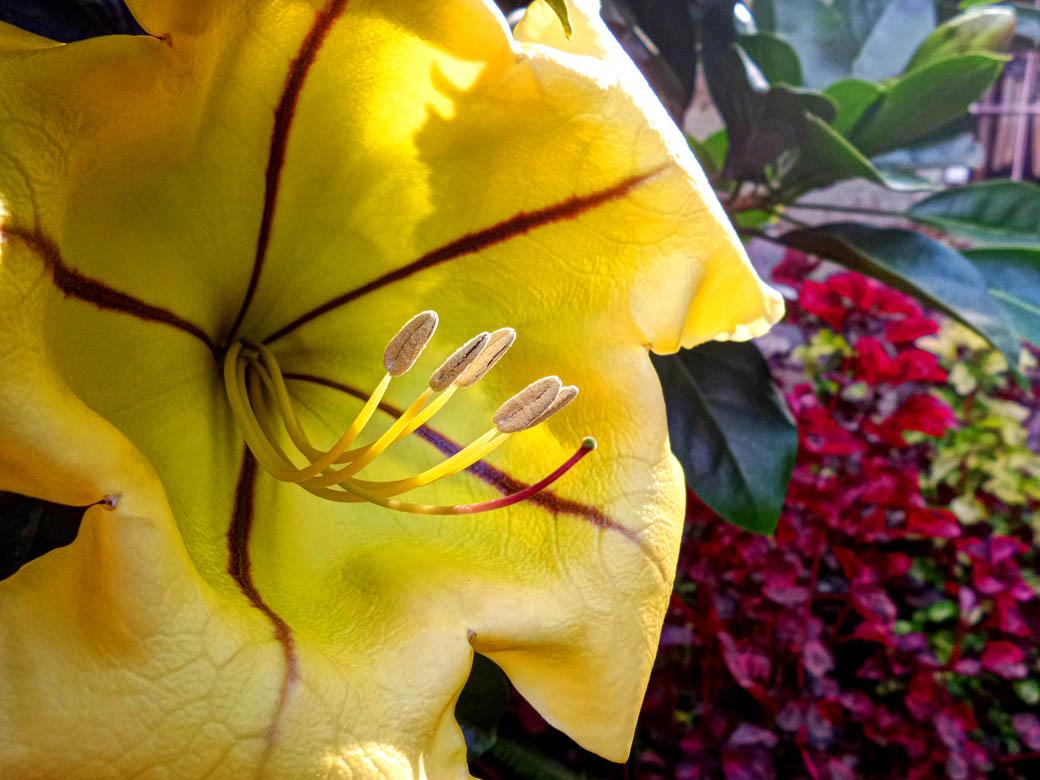 Karen Blixen Museum_Flower