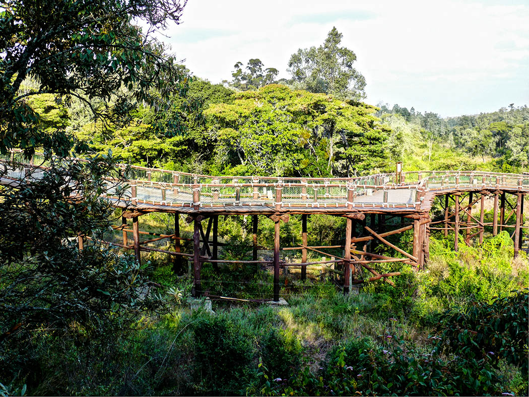3 unmissable experiences Nairobi_Nairobi safari walk2