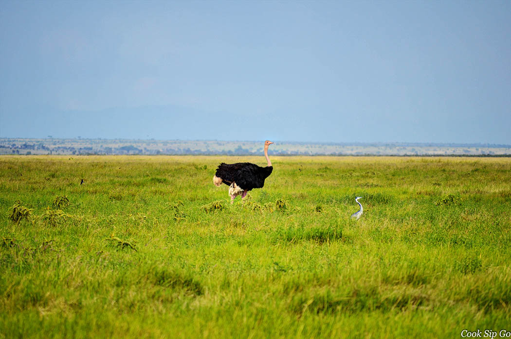 Birds of Amboseli National Park_Ostrich with Heron