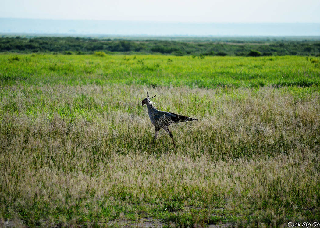 Birds of Amboseli National Park_Secretary Bird