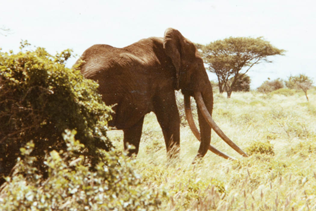 Nothern Kenya People and Places_Ahmed the elephant