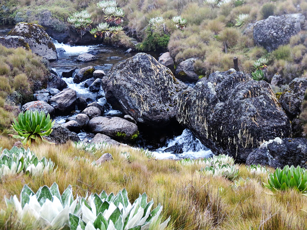 Mount Kenya_stream 7