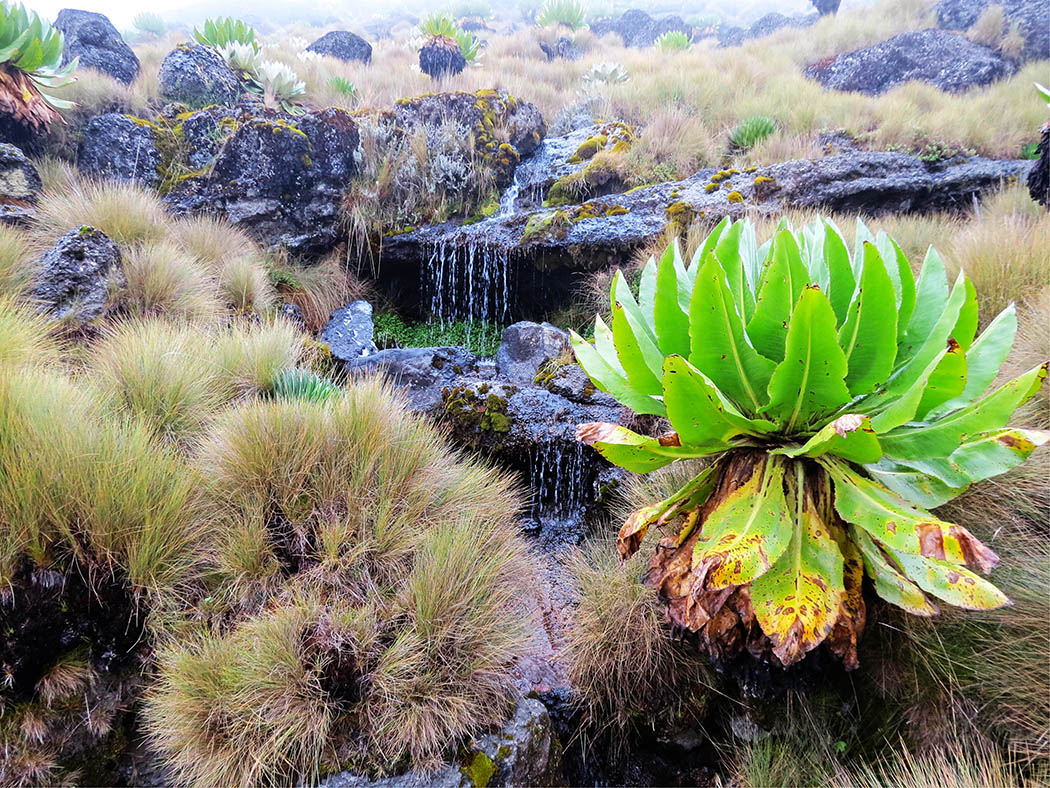 Mount Kenya_stream 8