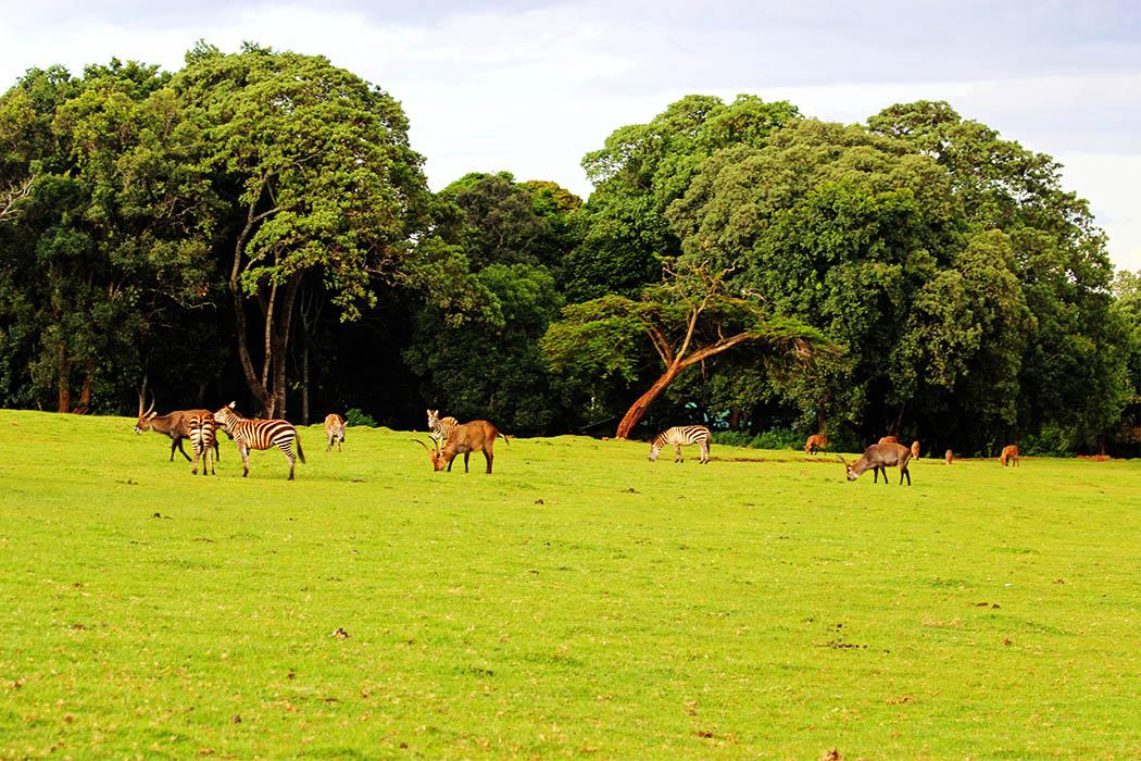 Unexpected Kenya _Waterbuck