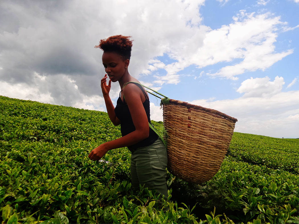 Unexpected Kenya_Kapsimotwa Gardens_tea picking