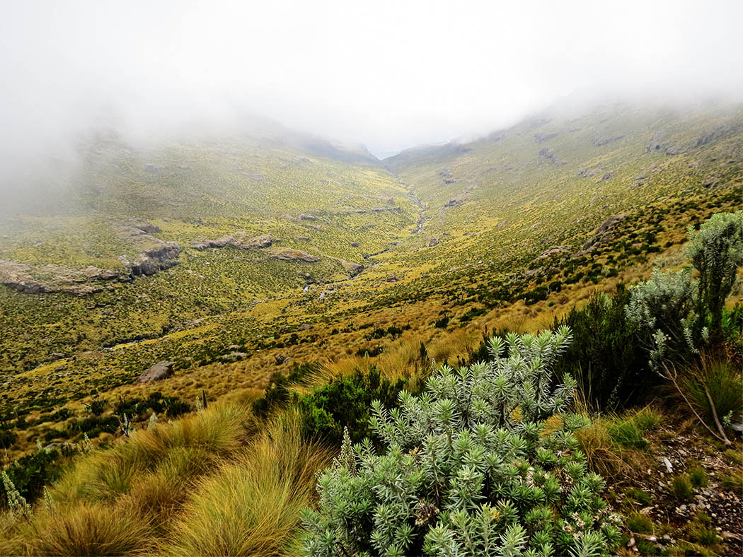 Mount Kenya_Mackinder's valley 10