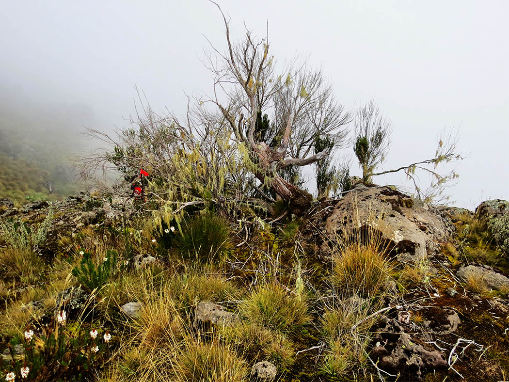 Mount Kenya_Mackinder's valley 6