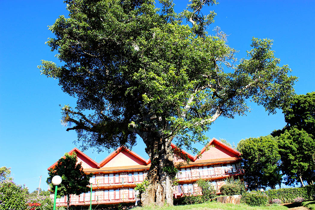 Kerio View Hotel_rooms