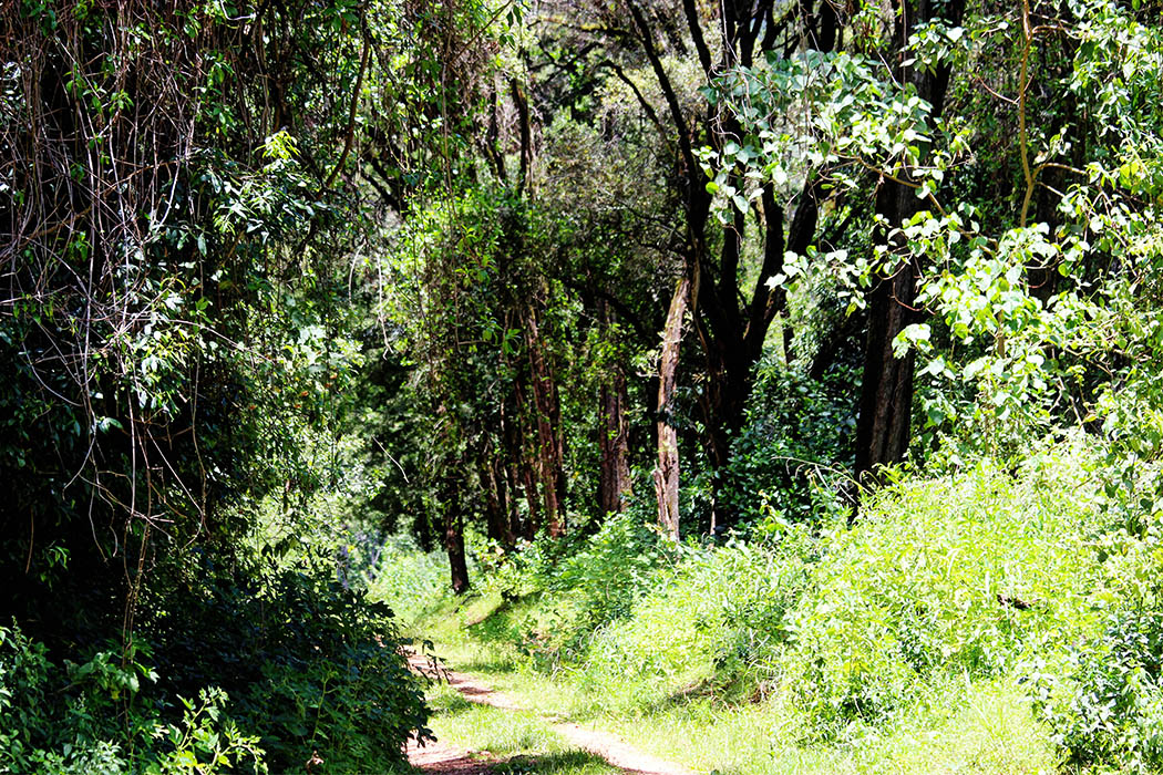 Mt Elgon National Park_vegetation