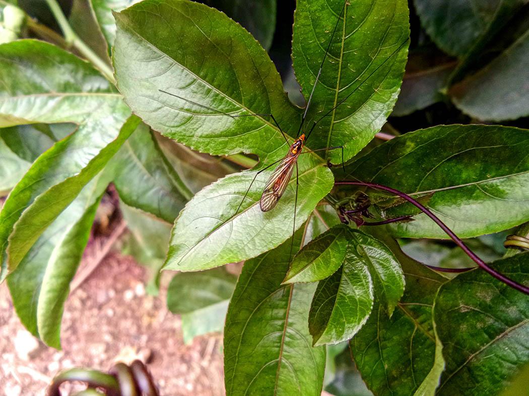 Wildlife in my backyard_mosquito