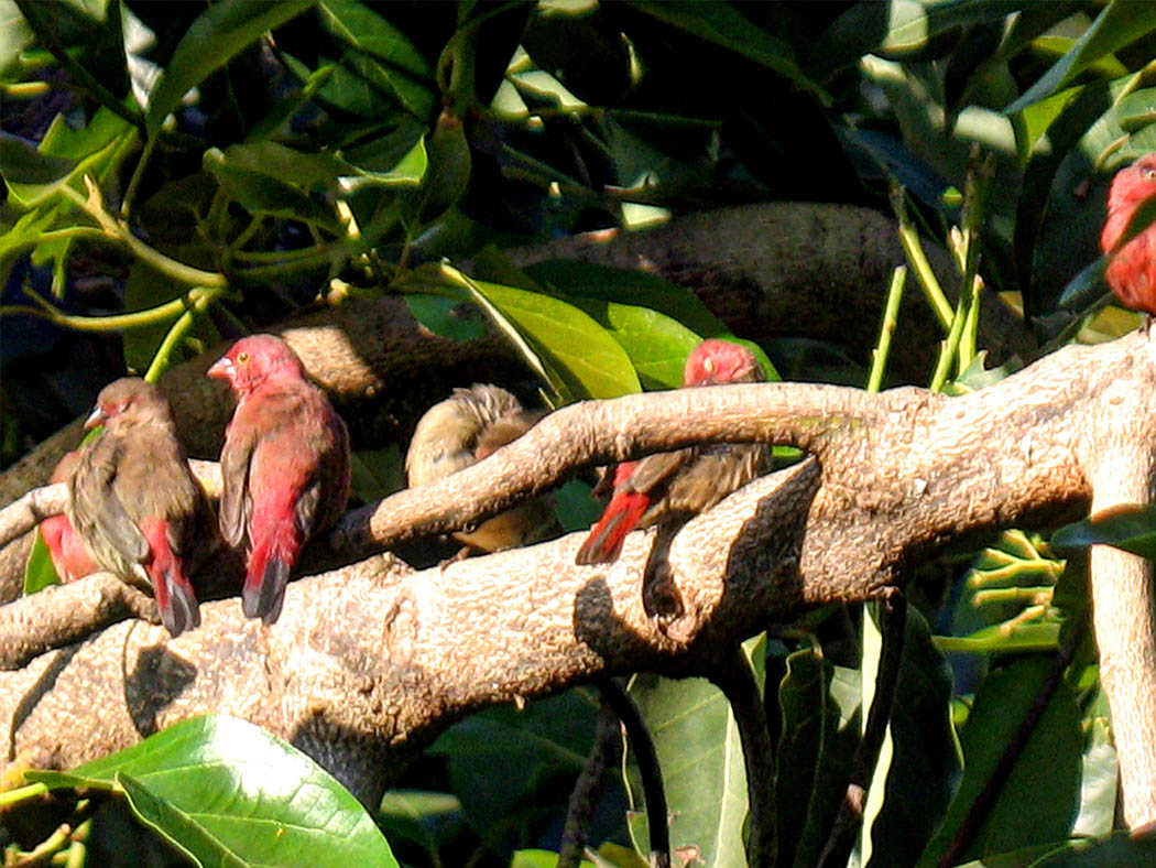 Wildlife in my backyard_robins