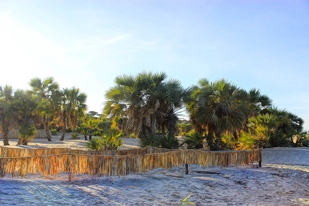 Eliye Springs Resort_Doum palms