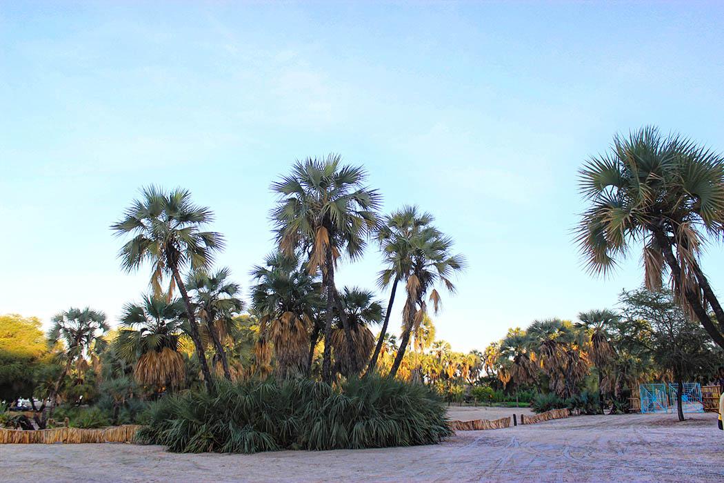 Eliye Springs Resort_Entrance
