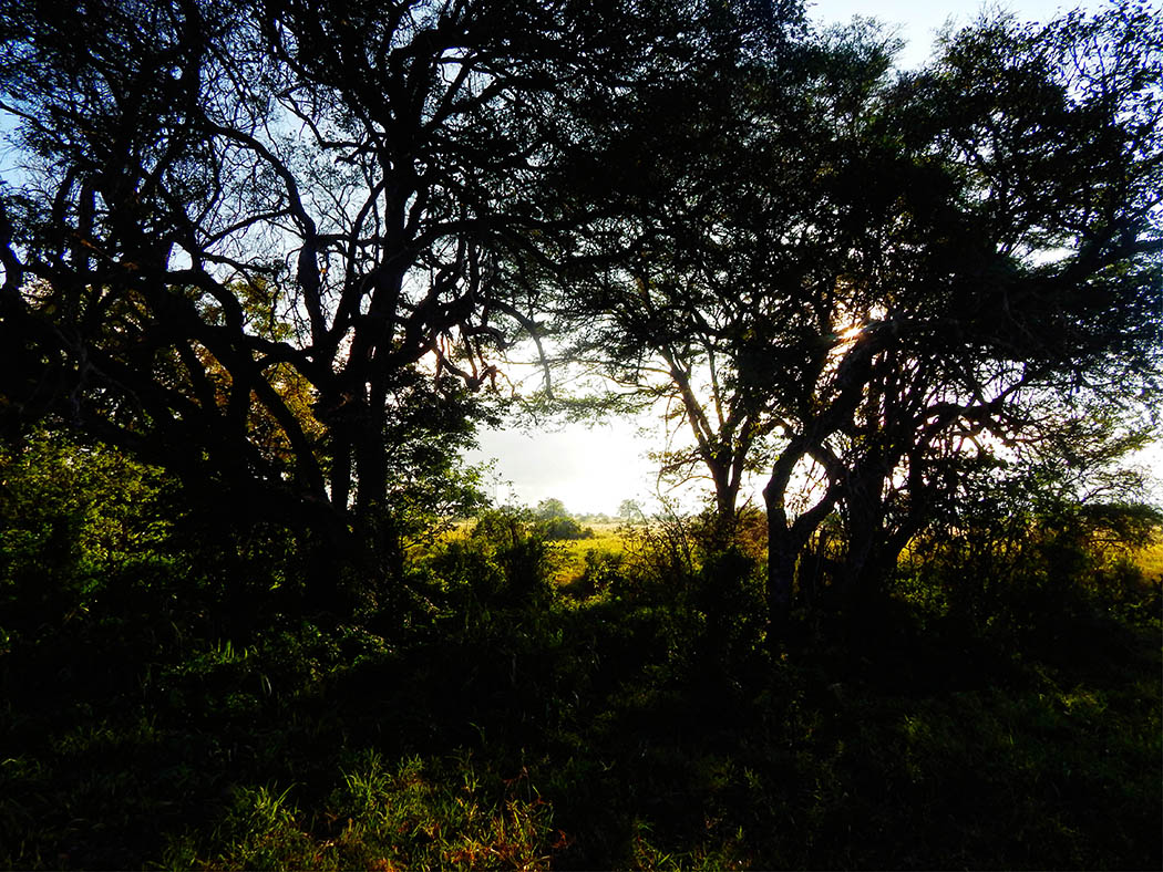 Taita Hills Wildlife Sanctuary_bushes