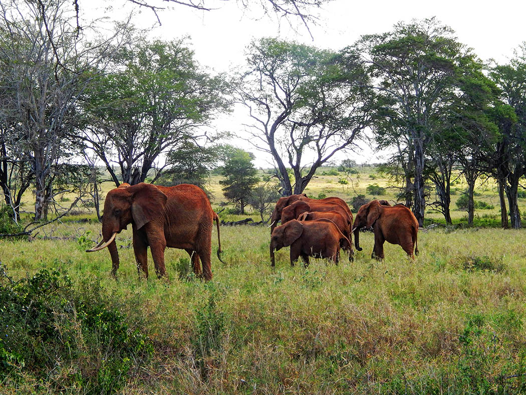 Taita Hills Wildlife Sanctuary_elephants3