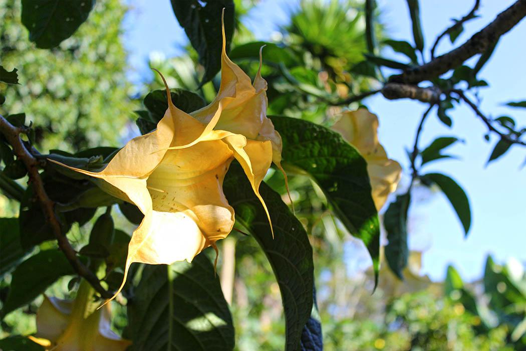 Kapsimotwa gardens_flower