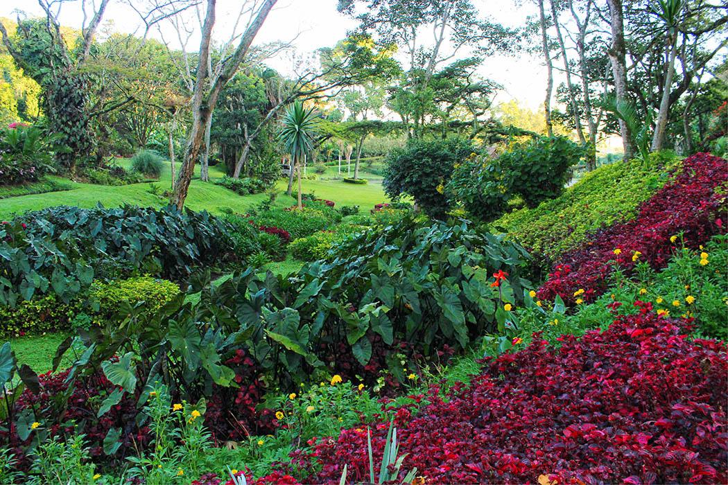 Kapsimotwa gardens_incline