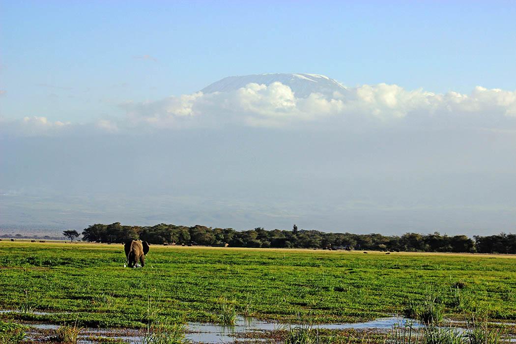 Amboseli National Park Elephant with Kilimanjaro in background
