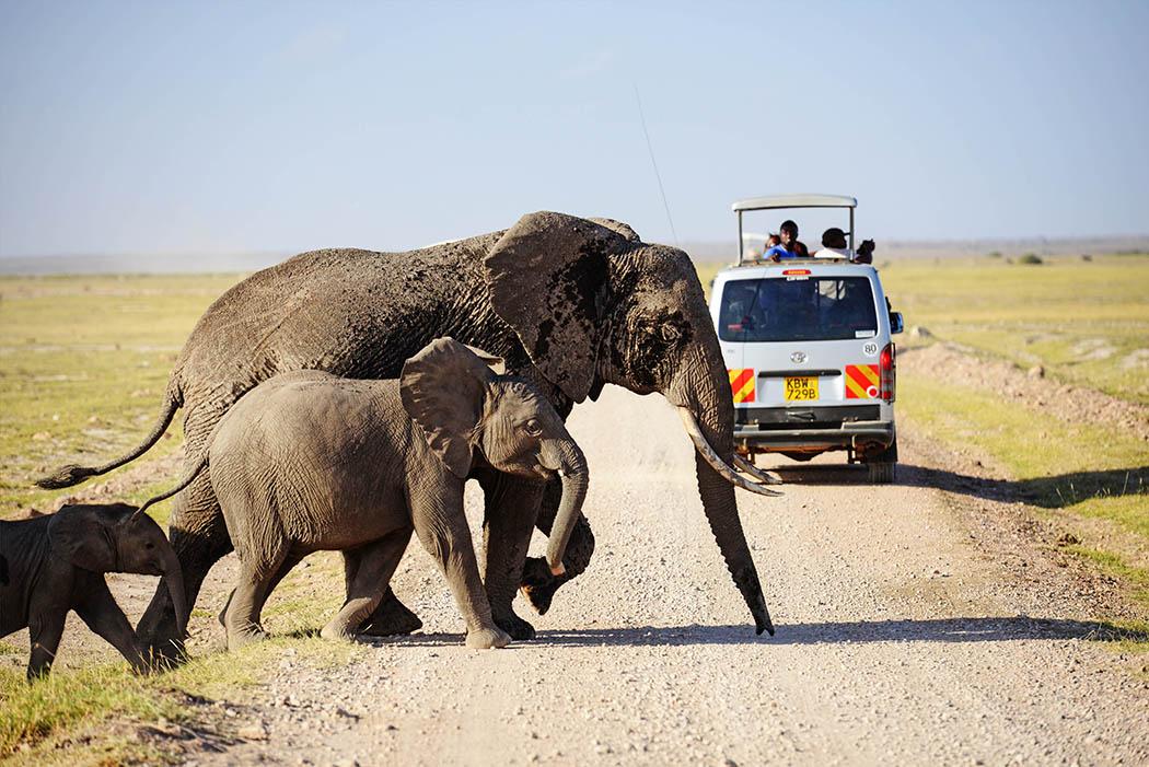Amboseli National Park elephants crossing