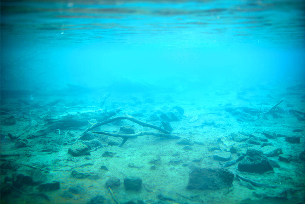 Tsavo West National Park_Mzima Springs underwater