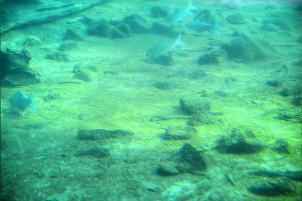 Tsavo West National Park_Mzima springs underwater (2)