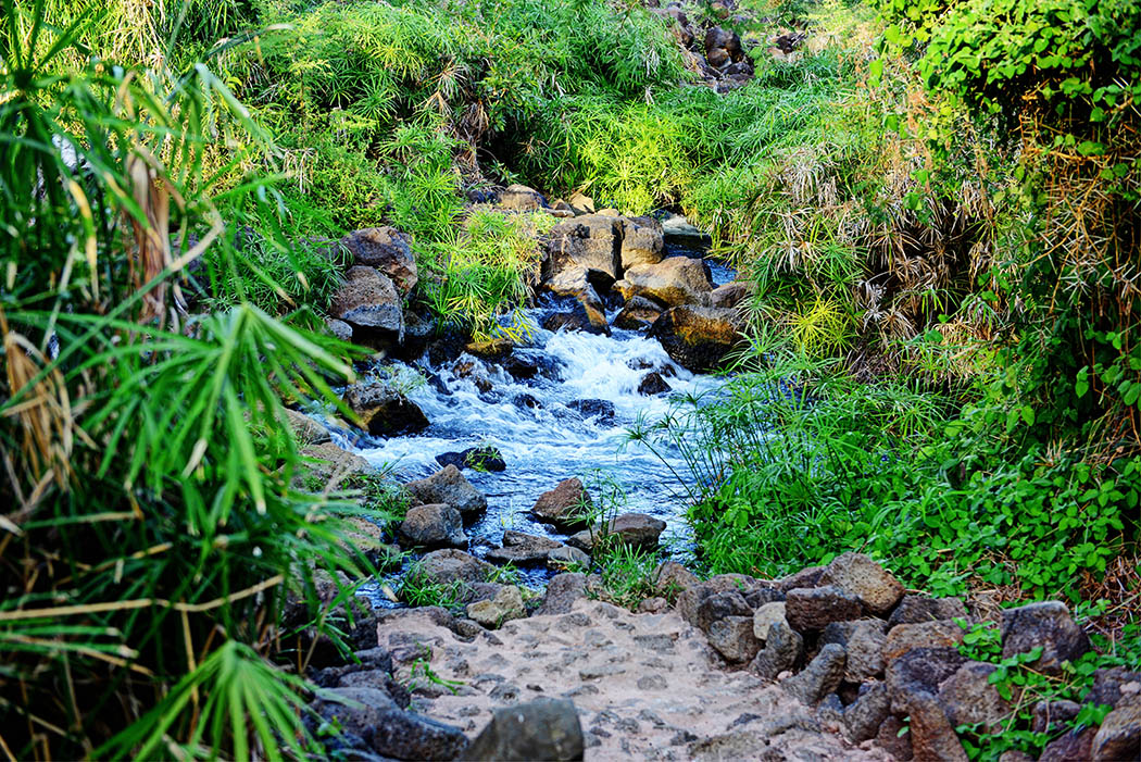 Tsavo West National Park_Mzima springs