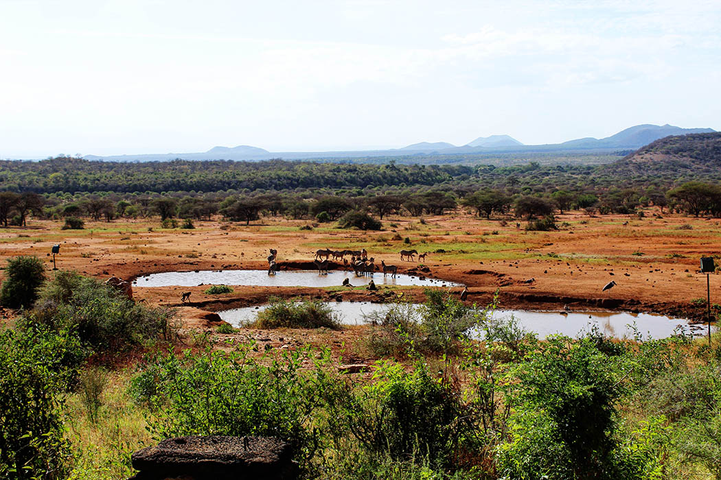 Tsavo West National Park_Watering hole1