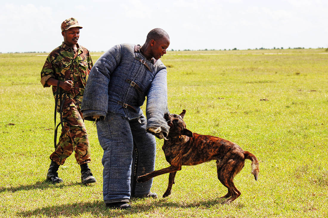 Ol Pejeta Conservancy_attack dog