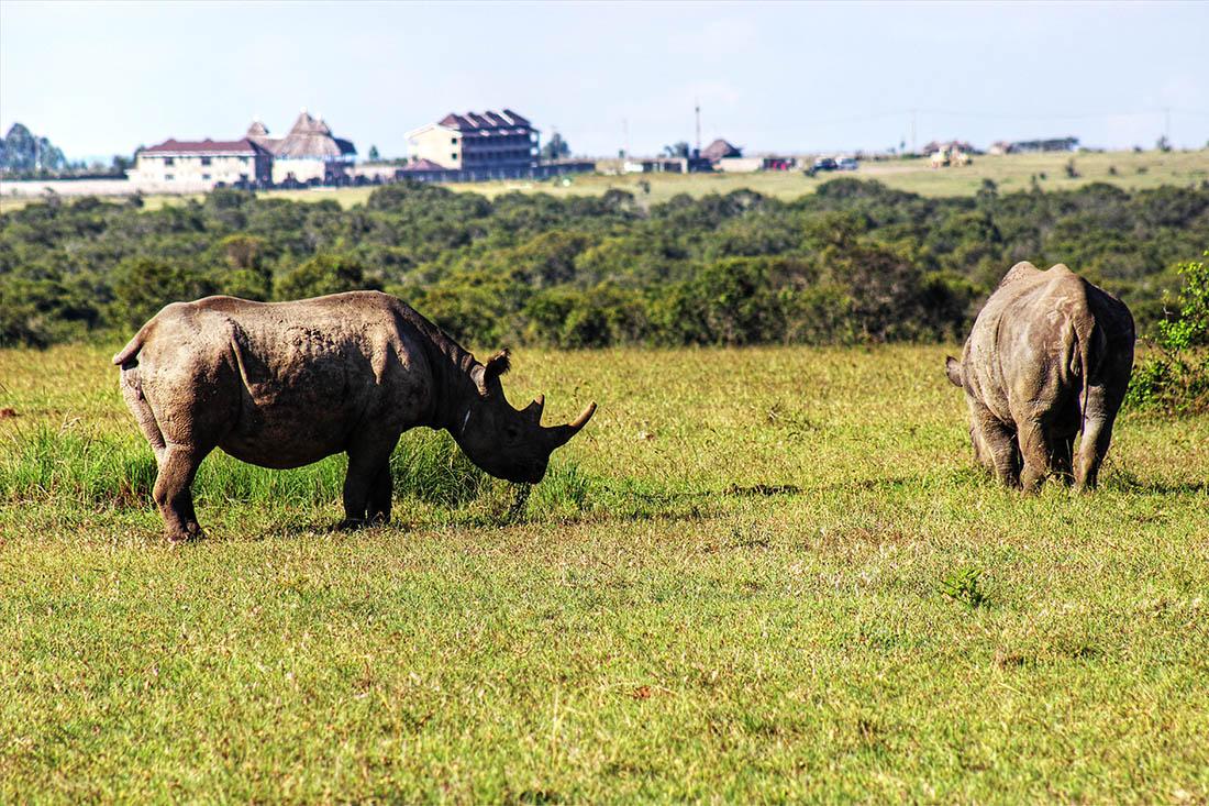 Ol Pejeta Conservancy_black rhino