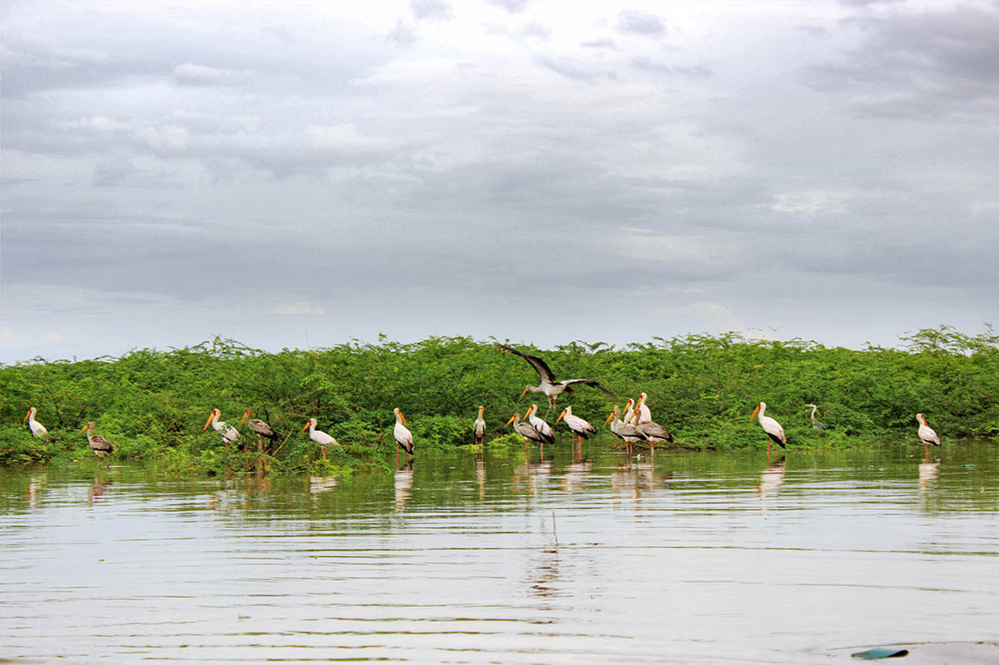Lake Turkana_Yellow-billed stork s