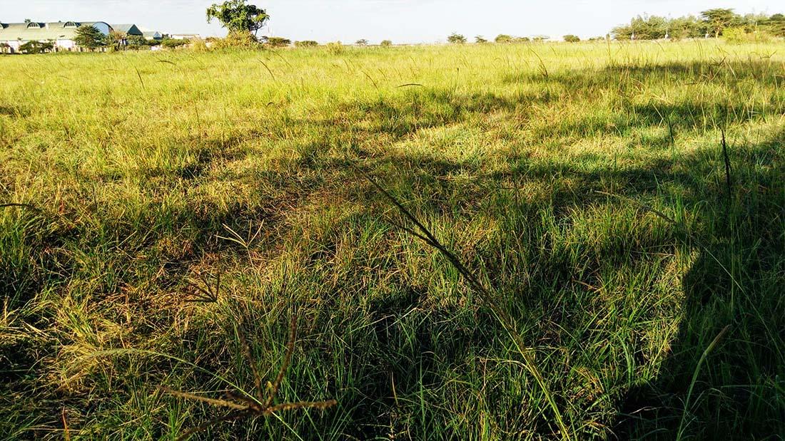 TECNO Camon C5 Review_Uhuru gardens_open field