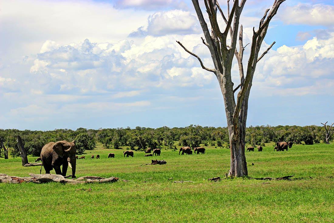 Ol Pejeta Conservancy_elephant