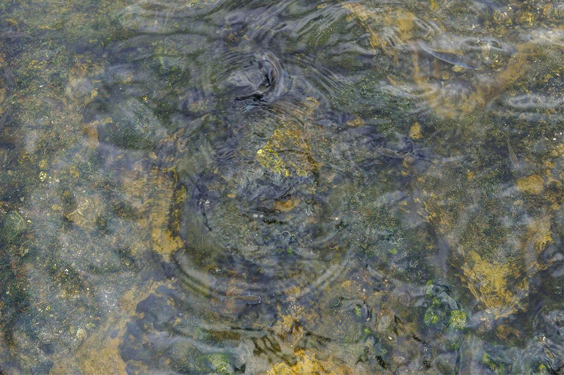 Lake Magadi_fish