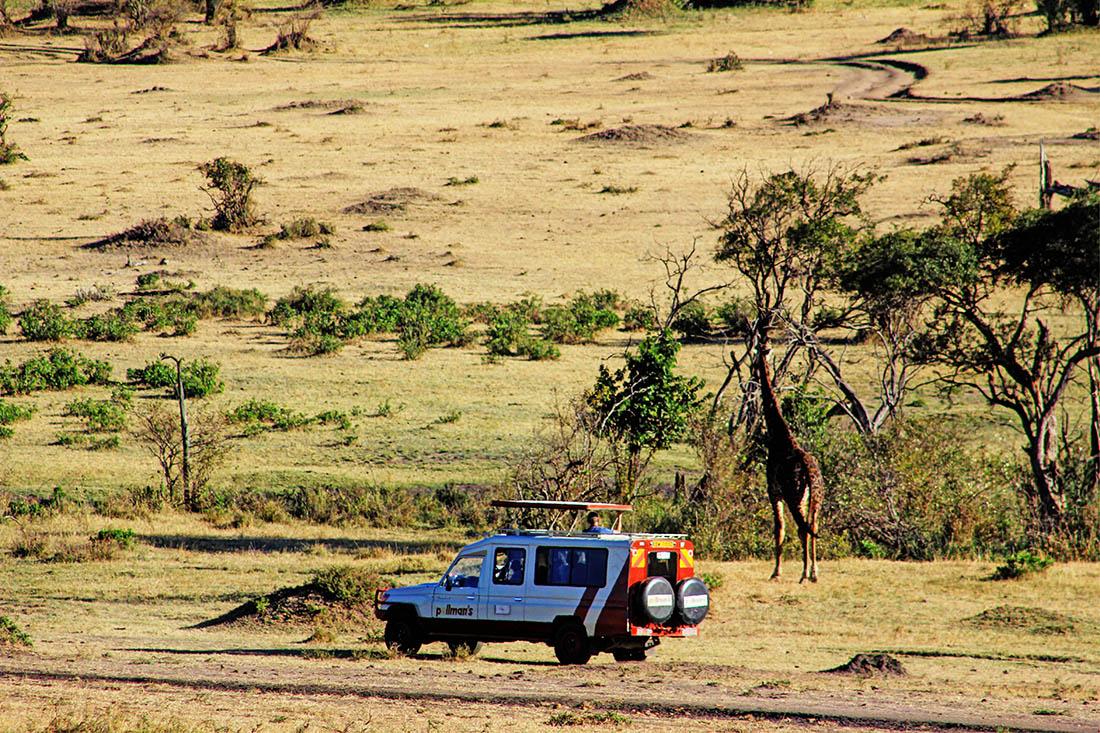 Maasai Mara_Giraffe3