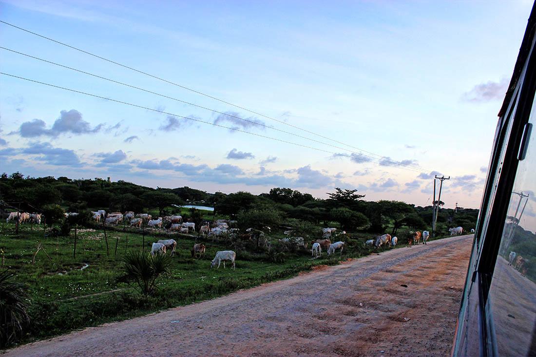 Mpeketoni (2)